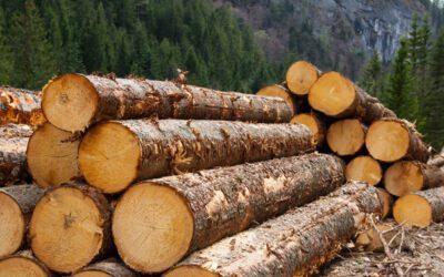 Studiu Horváth, firmă de consultanţă: Creşterile de preţ la materiile prime vor continua şi după pandemie. Preţul lemnului s-a dublat în septembrie în Germania şi România